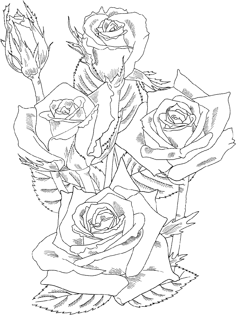 Rose Coloring Pages Realistic