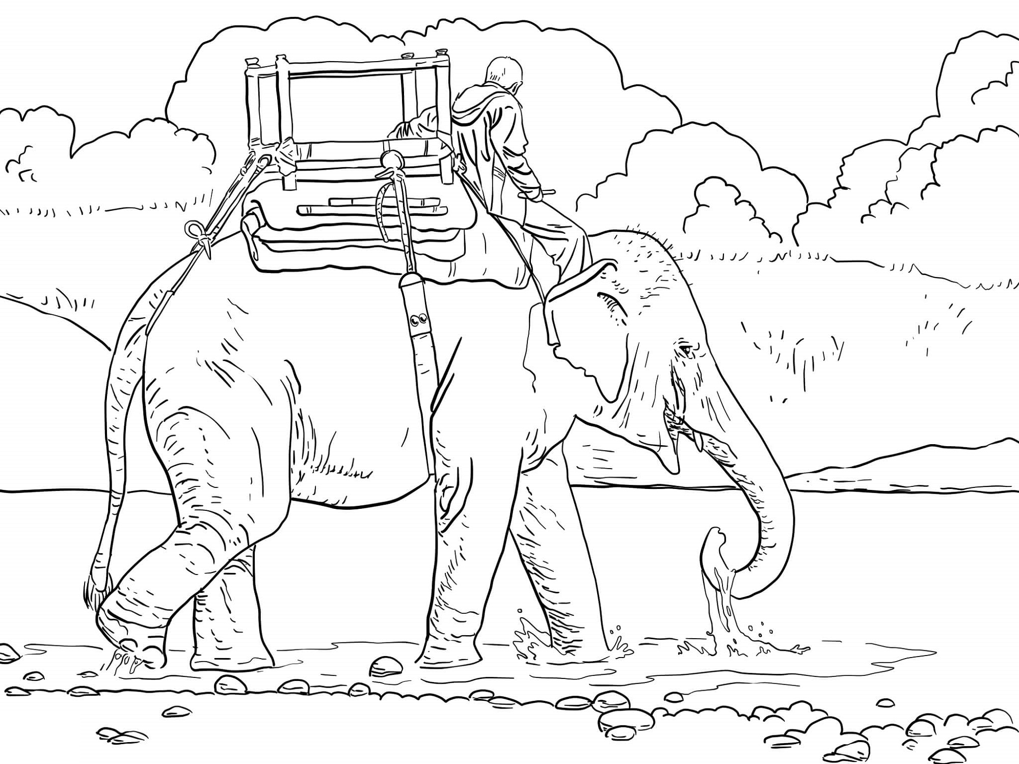 Adult Coloring Pages Elephant Indian