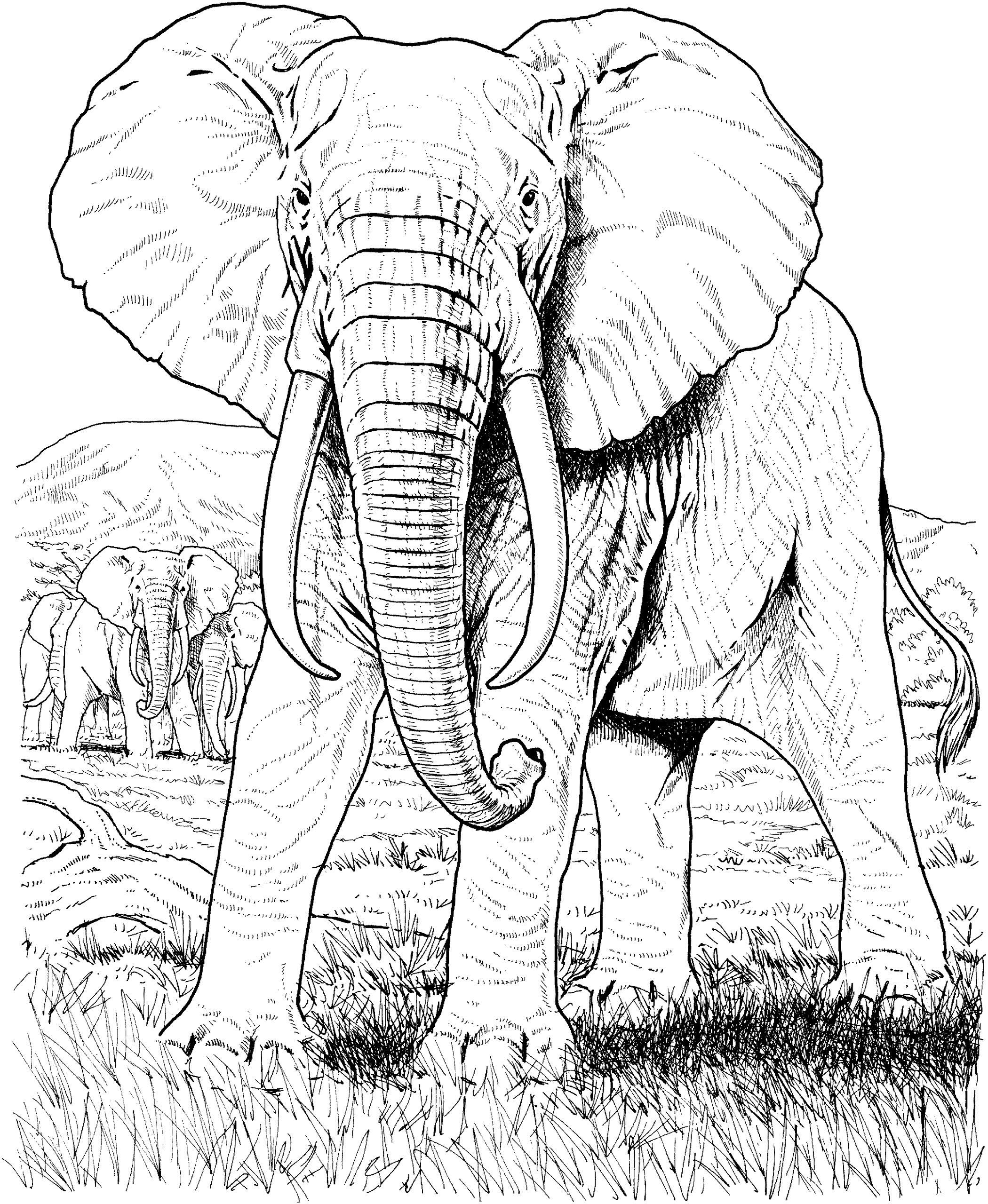 Adult Coloring Pages Elephant Realistic