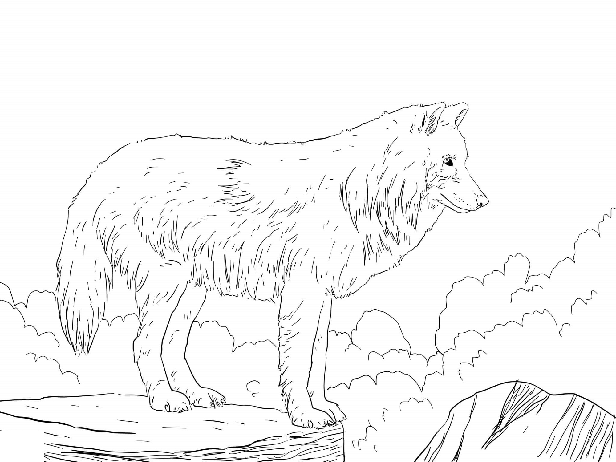 Arctic Snow Wolf Coloring Pages