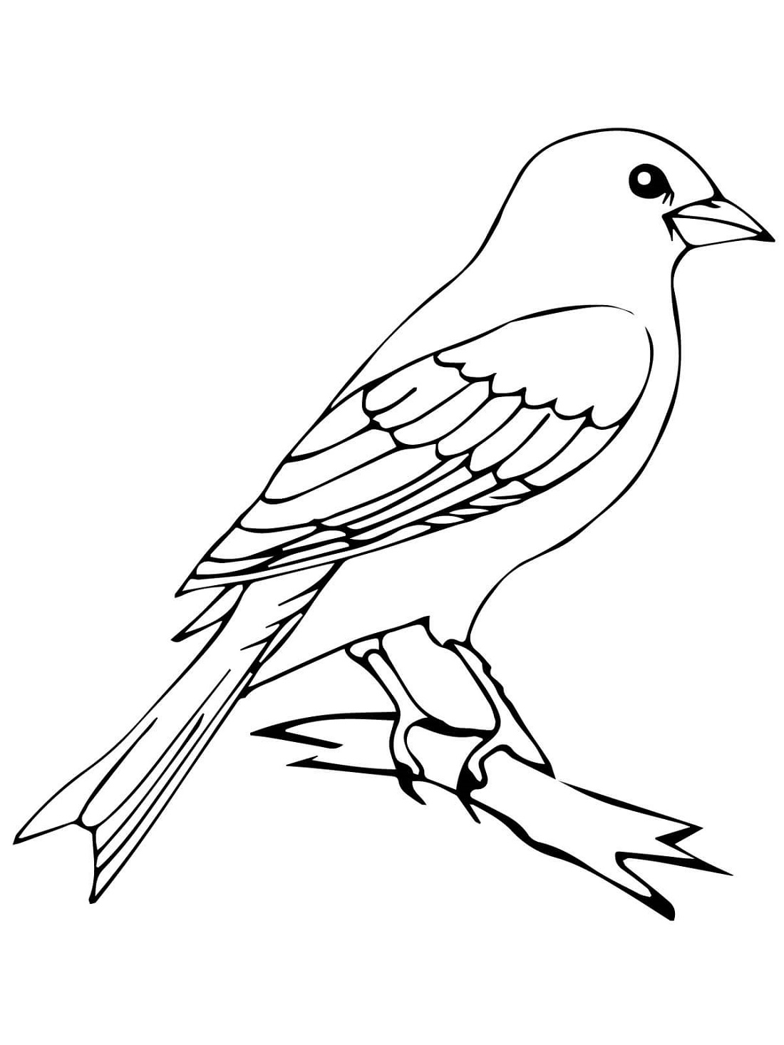Bird Coloring Pages Mother And Baby