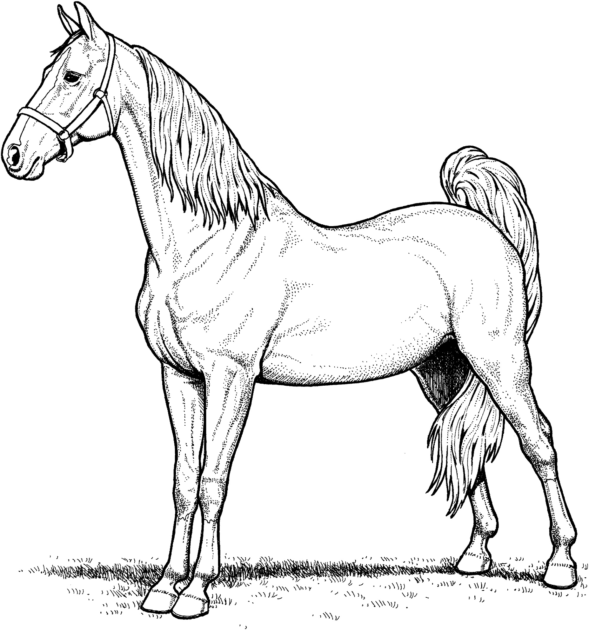 Coloring Books For Adults Online Horse