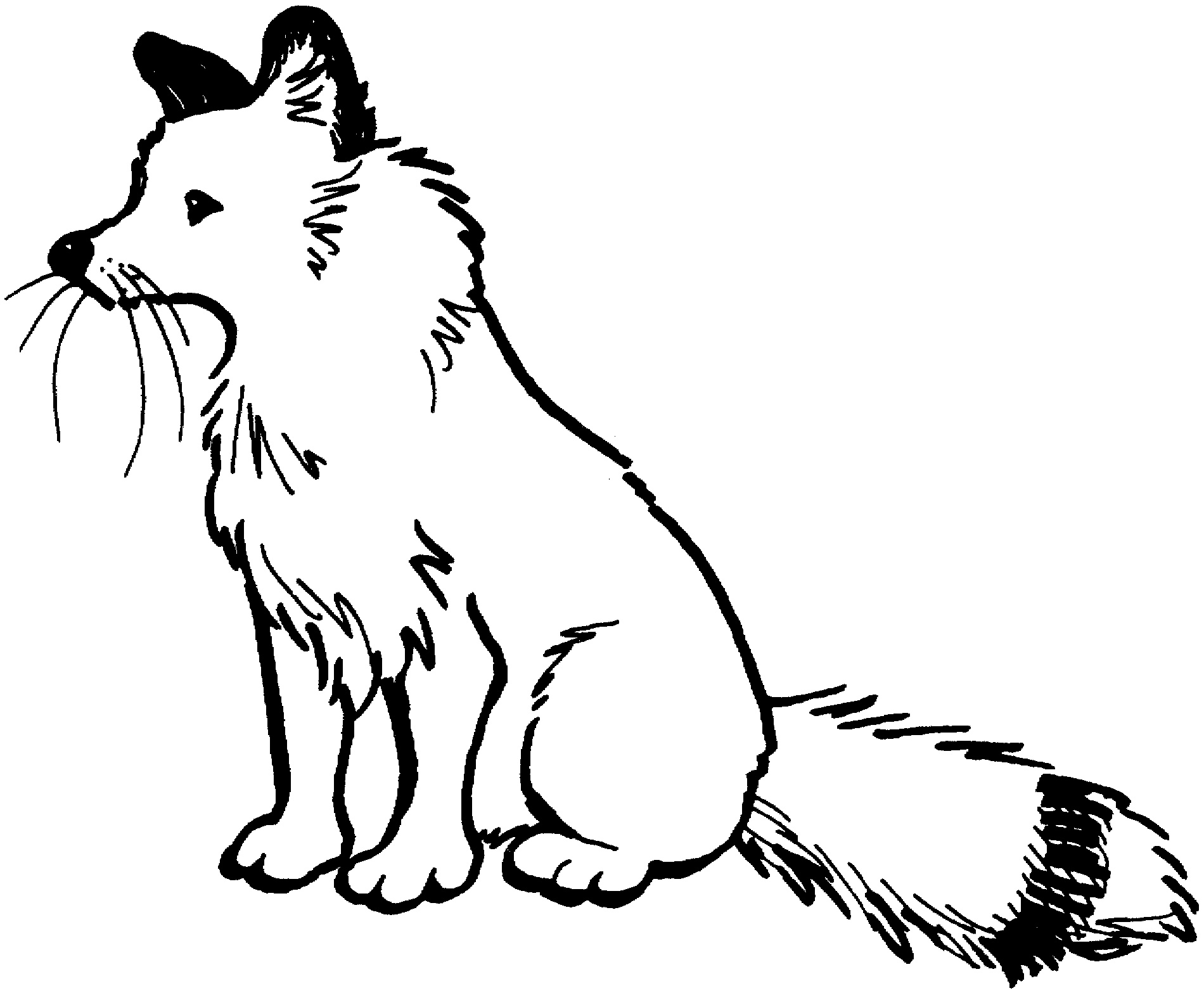 Fox Coloring Pages Sitting