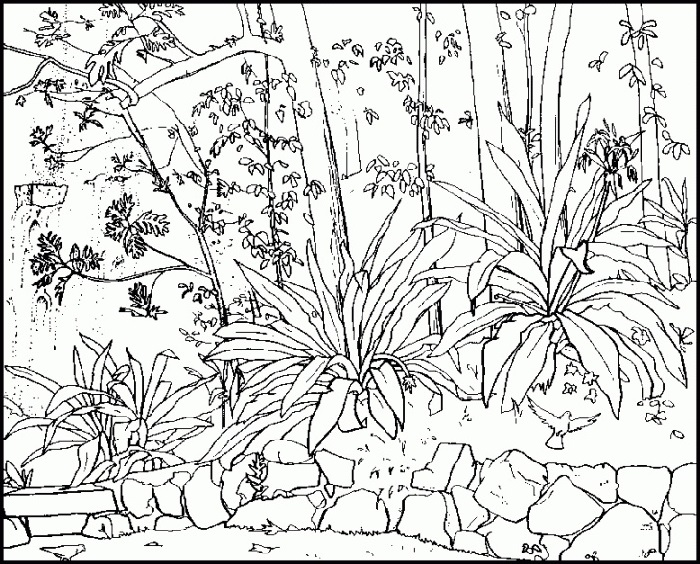 Free Printable Coloring Pages For Adults Advanced Nature