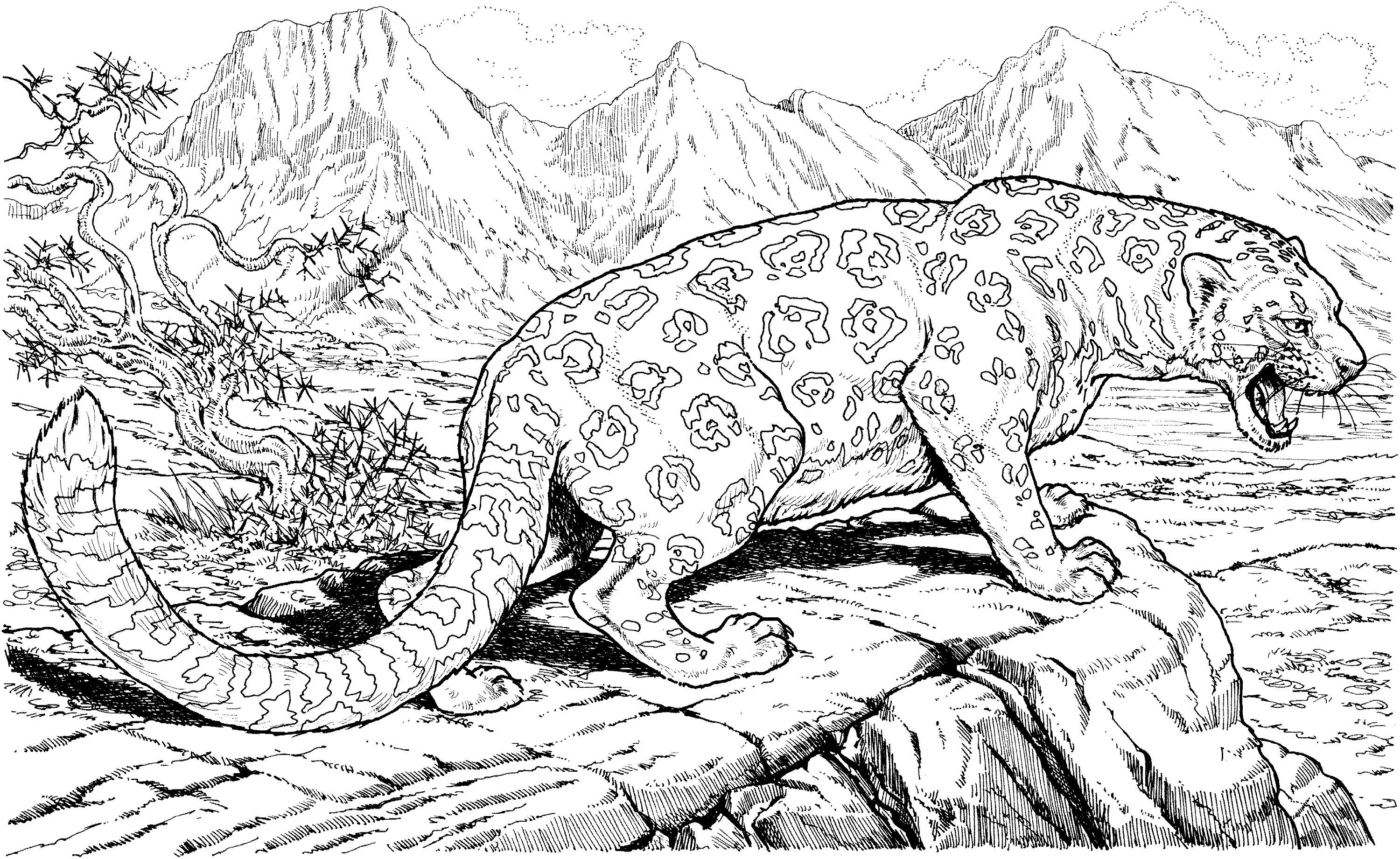 Jaguar Coloring Pages For Adult
