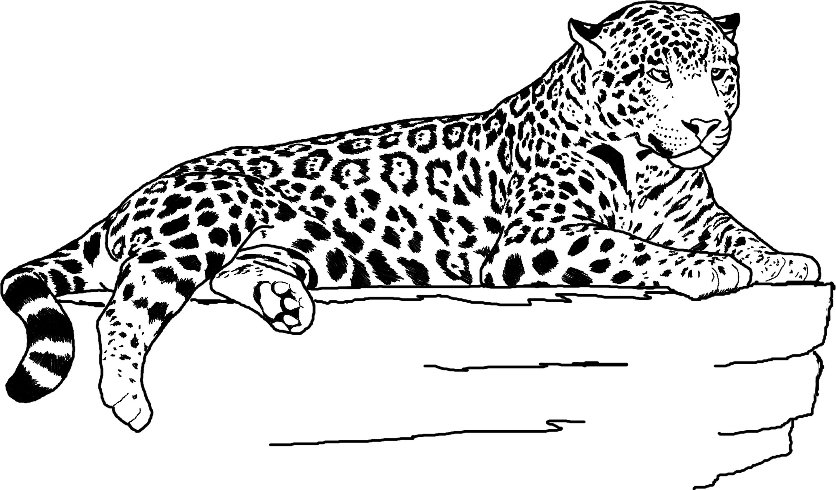 Jaguar Coloring Pages Lying