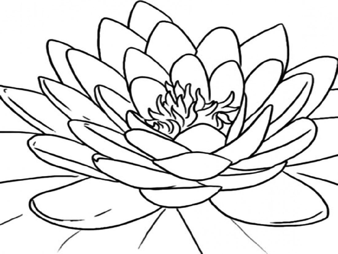 Lotus Flower Coloring Page Printable