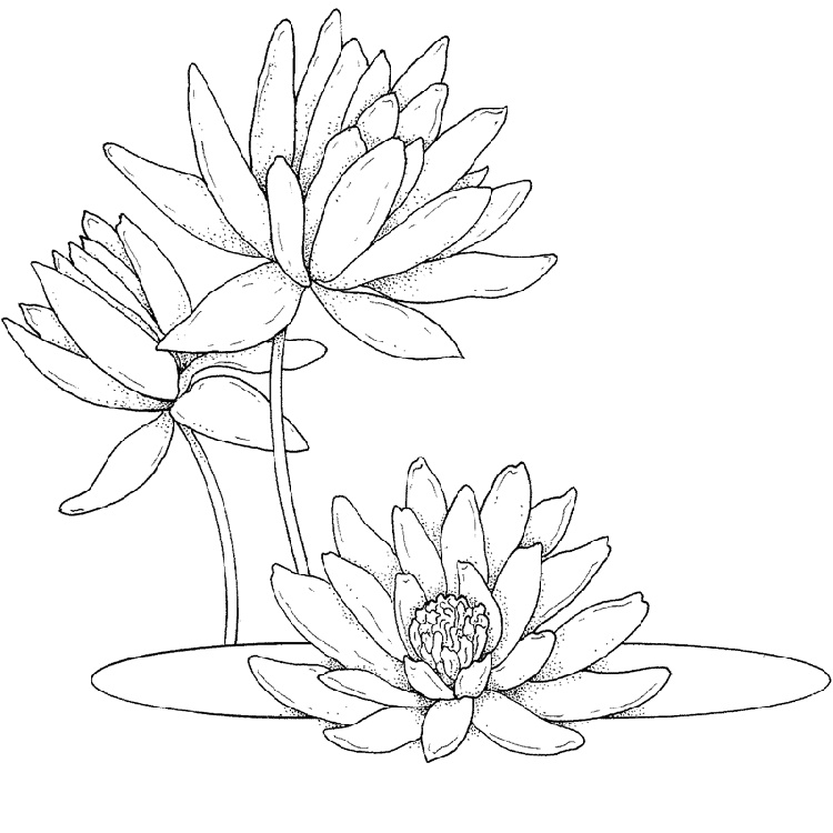 Lotus Flower Coloring Page To Print