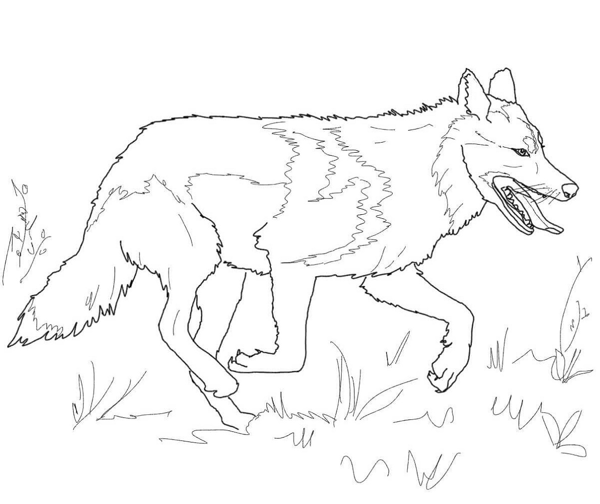 Running Wolf Coloring Pages