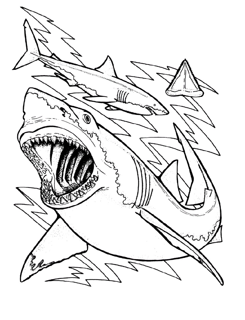 Shark Coloring Pages Free