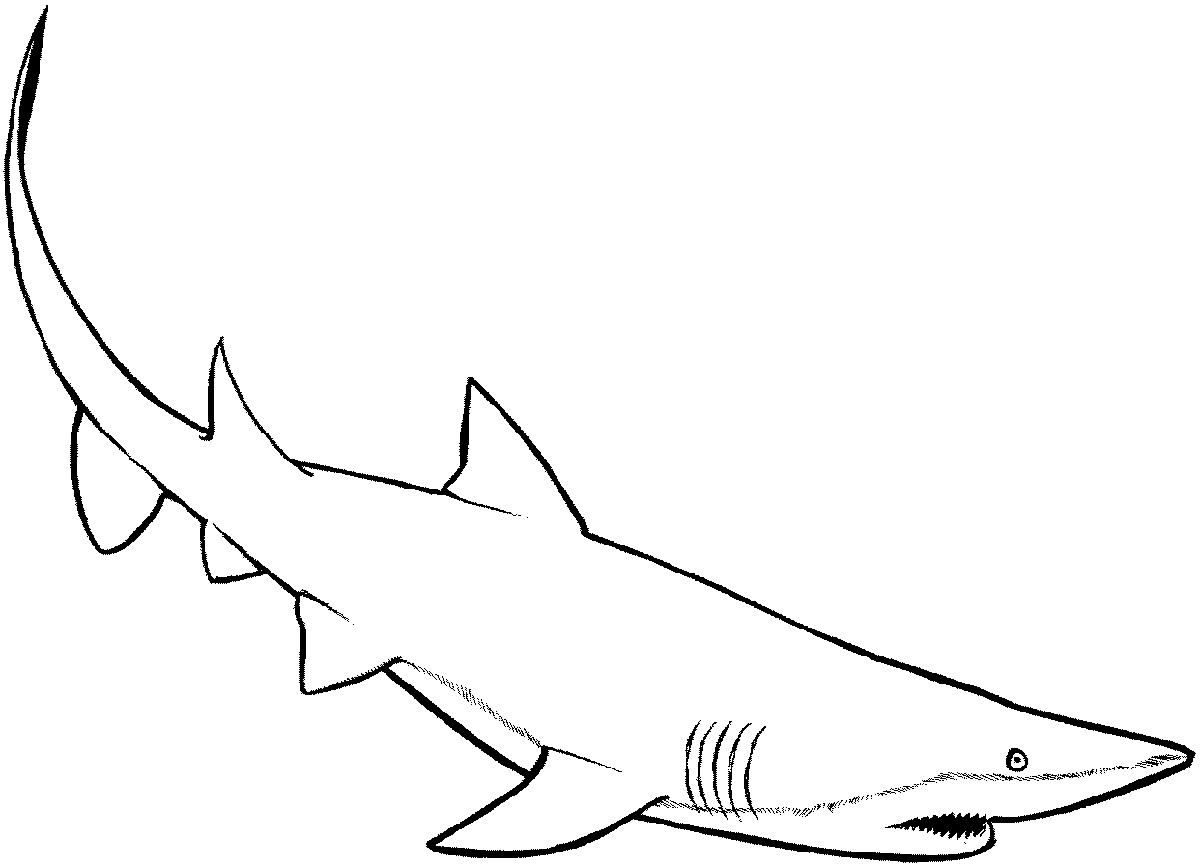 Shark Coloring Pages Printable