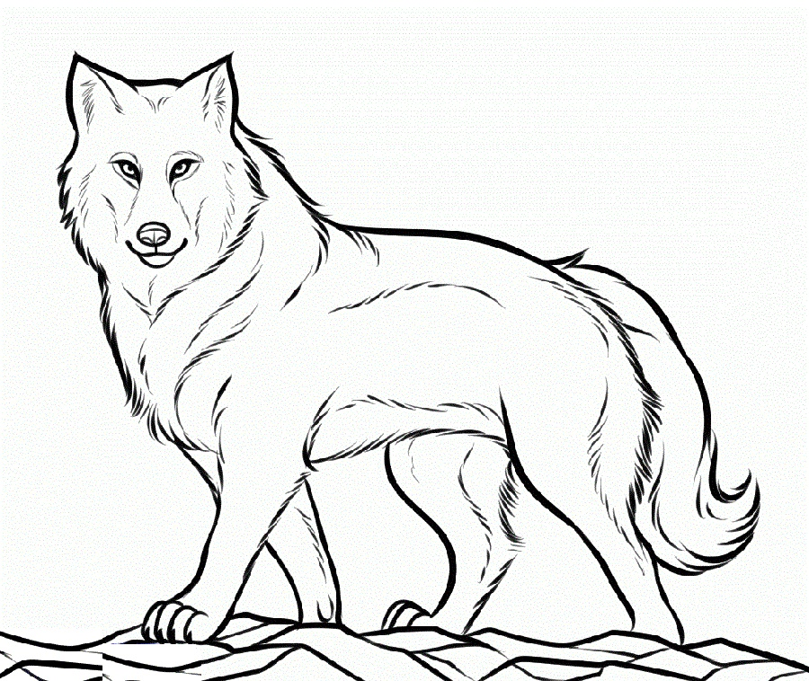 Wolf Coloring Pages Printable