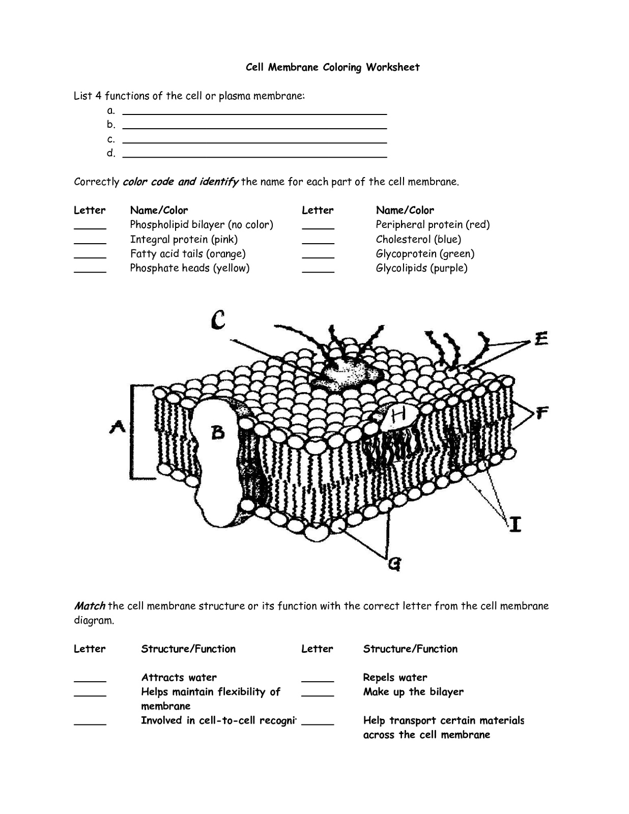 Cell Membrane Coloring Worksheet Free