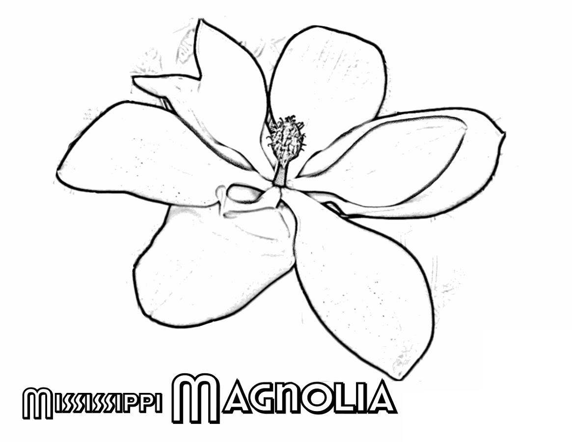 Flower Coloring Mississipi Magnolia