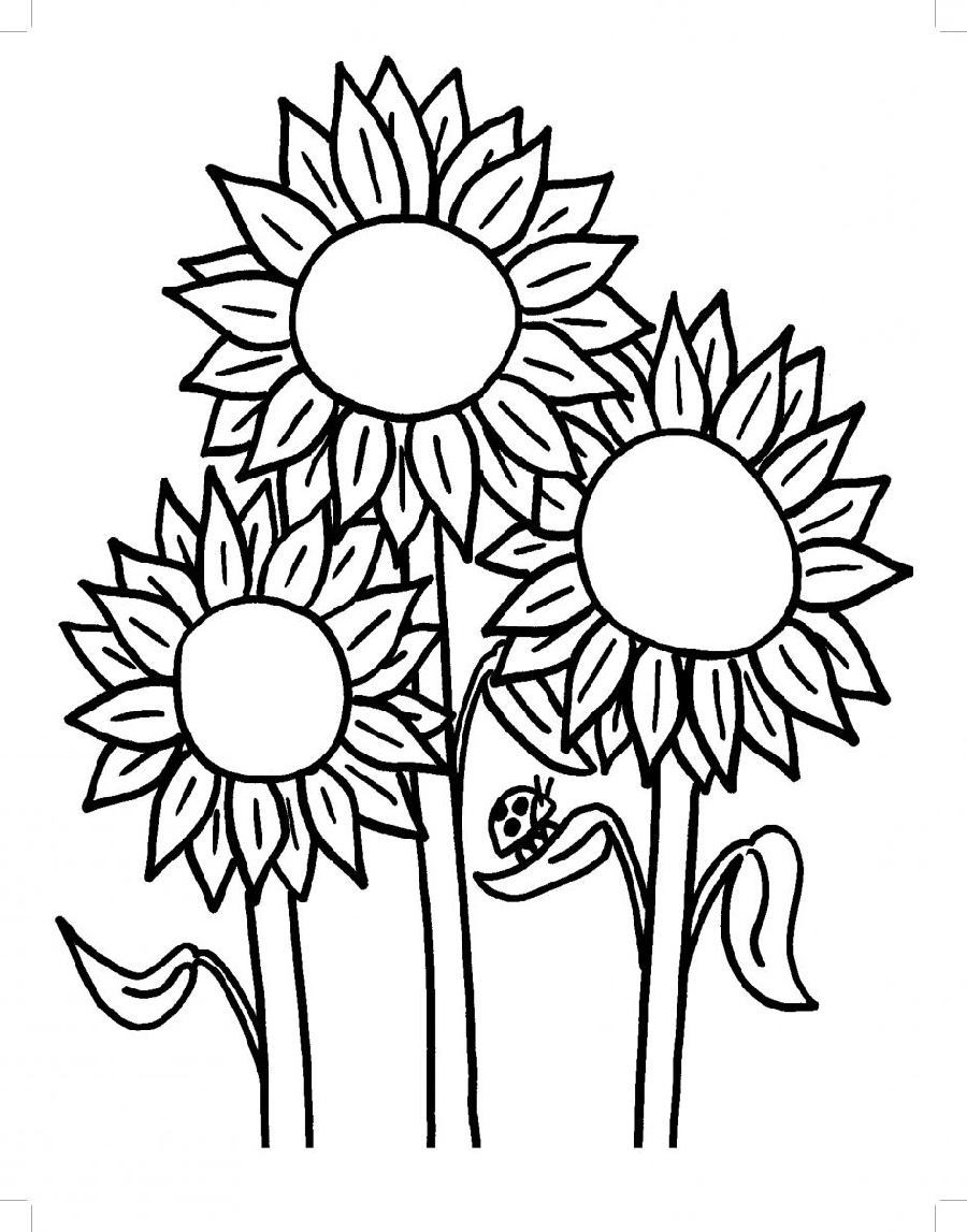 Flower Coloring Sunflower