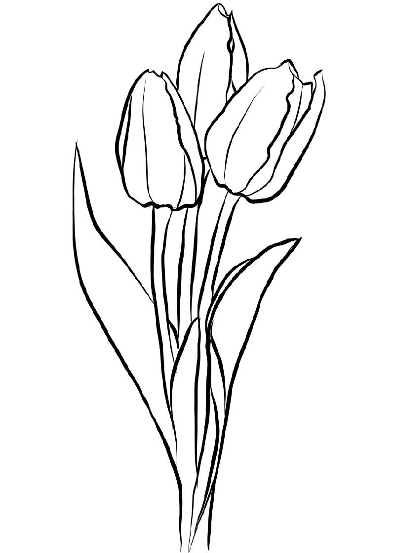 Flower Coloring Tulip