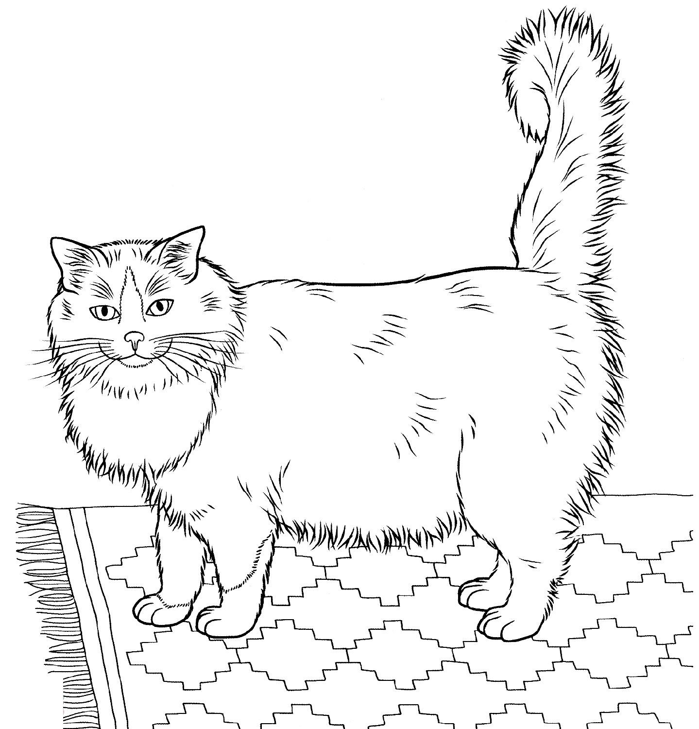 Ragdoll Cat Coloring Book