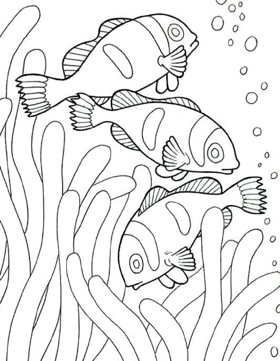Sea-Animal-Coloring-Book