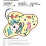 Animal Cell Coloring Answers Biology