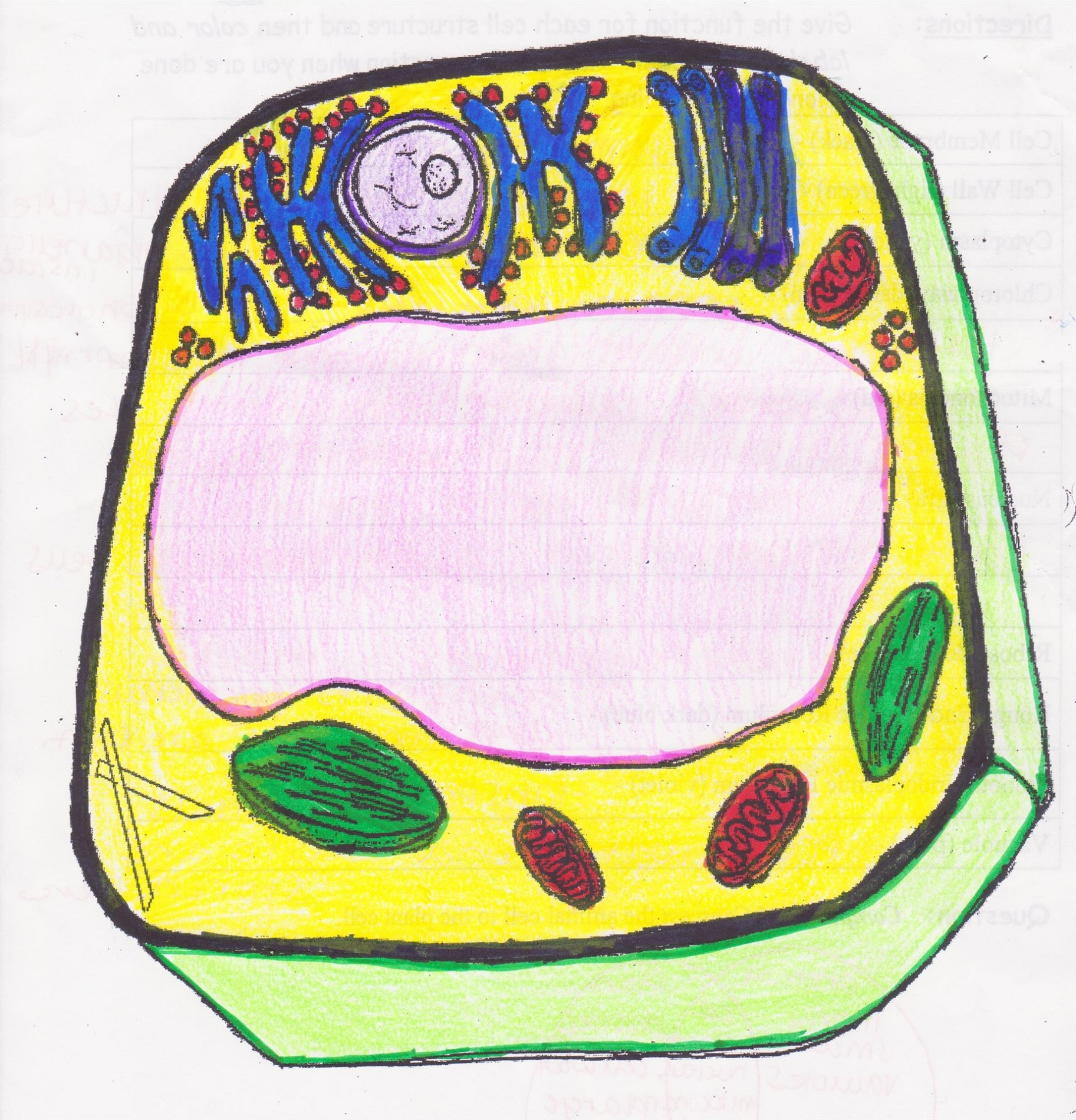 Animal Cell Coloring Answers To Print