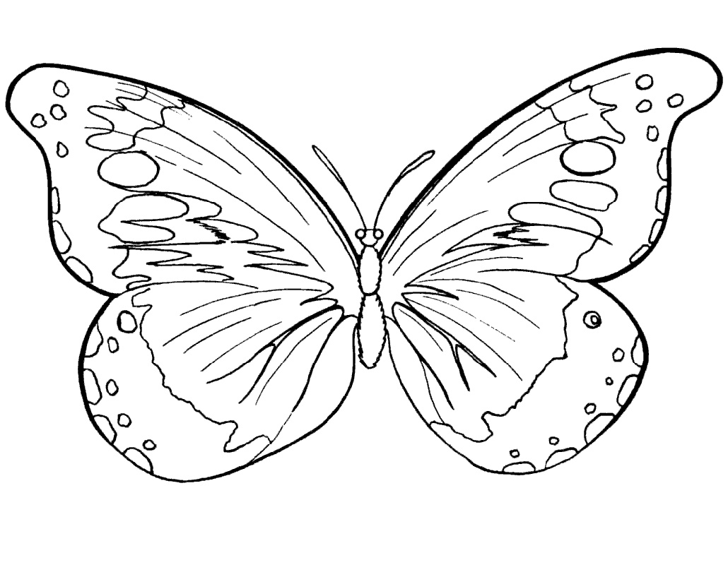 Butterfly Coloring Free