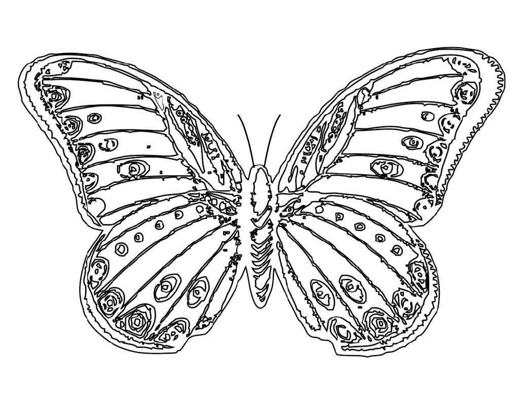 Butterfly Coloring Printable