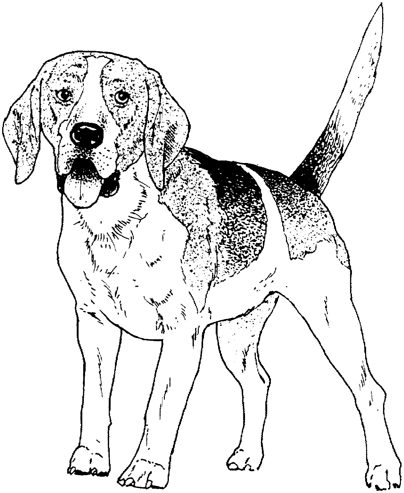 Dog Coloring Dog Breed