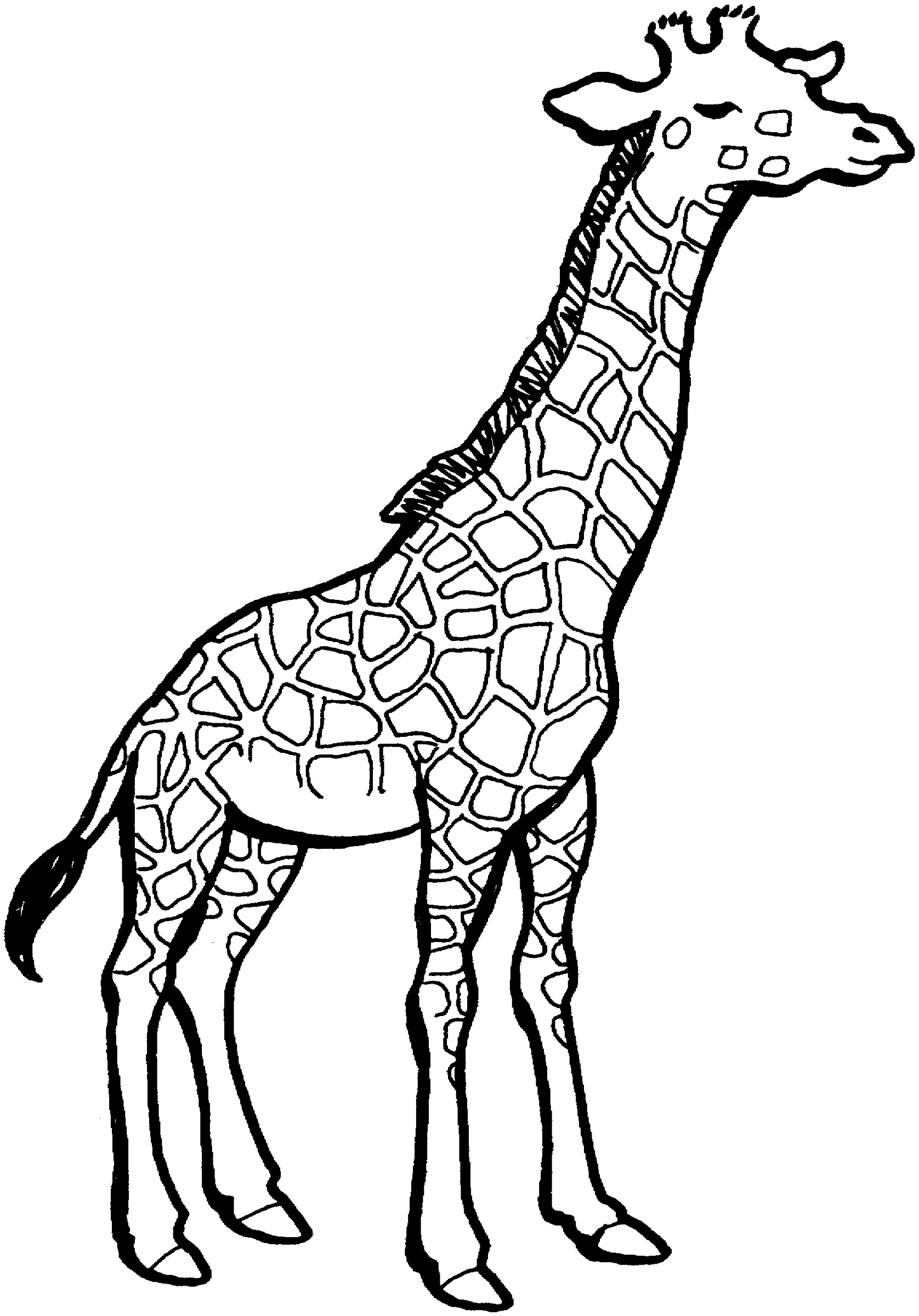 Coloring Pictures Of Animals Giraffee