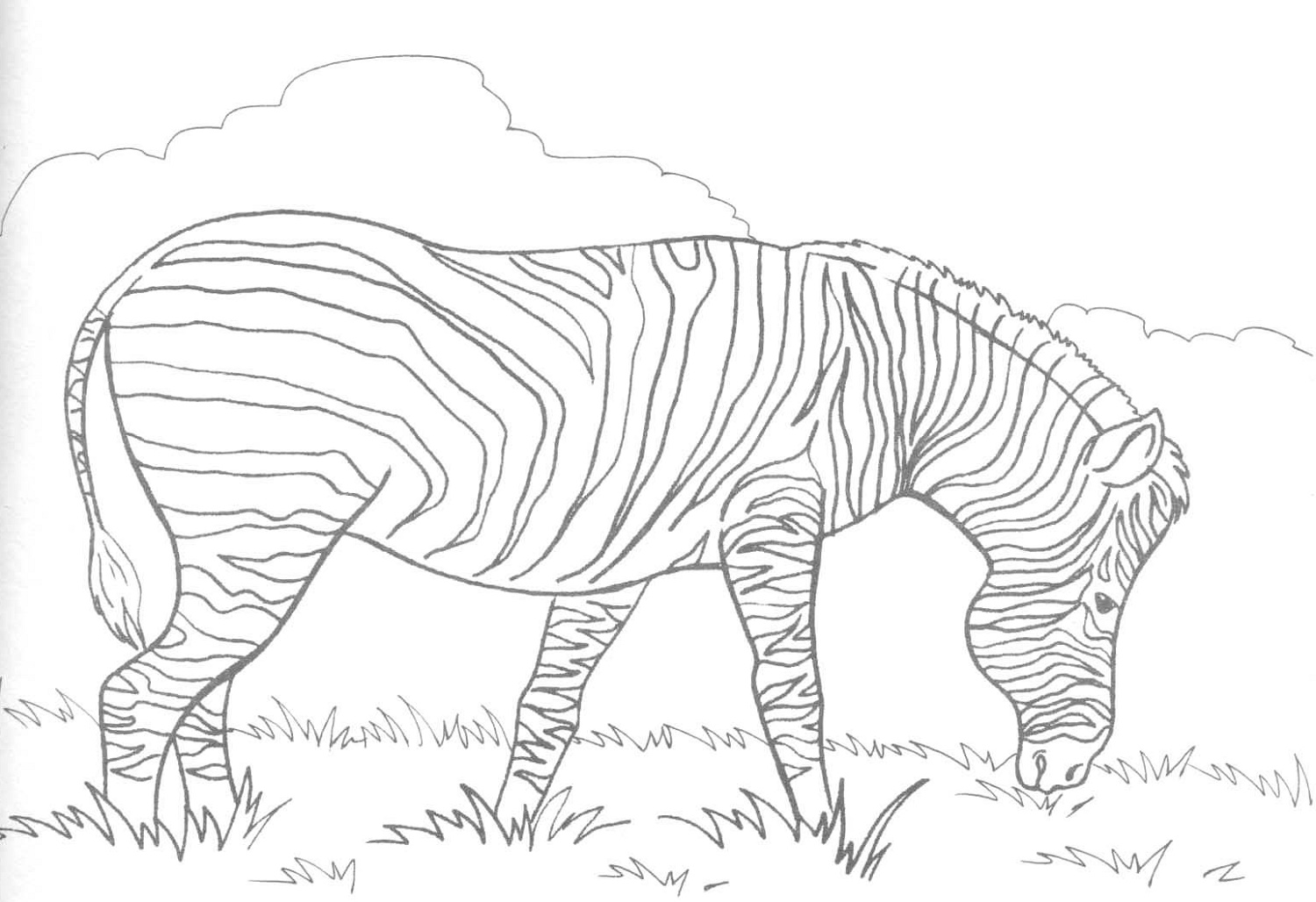 Coloring Pictures Of Animals Zebra