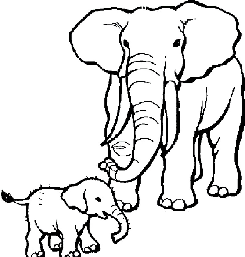 Elephant Coloring Pages And Baby Elephant