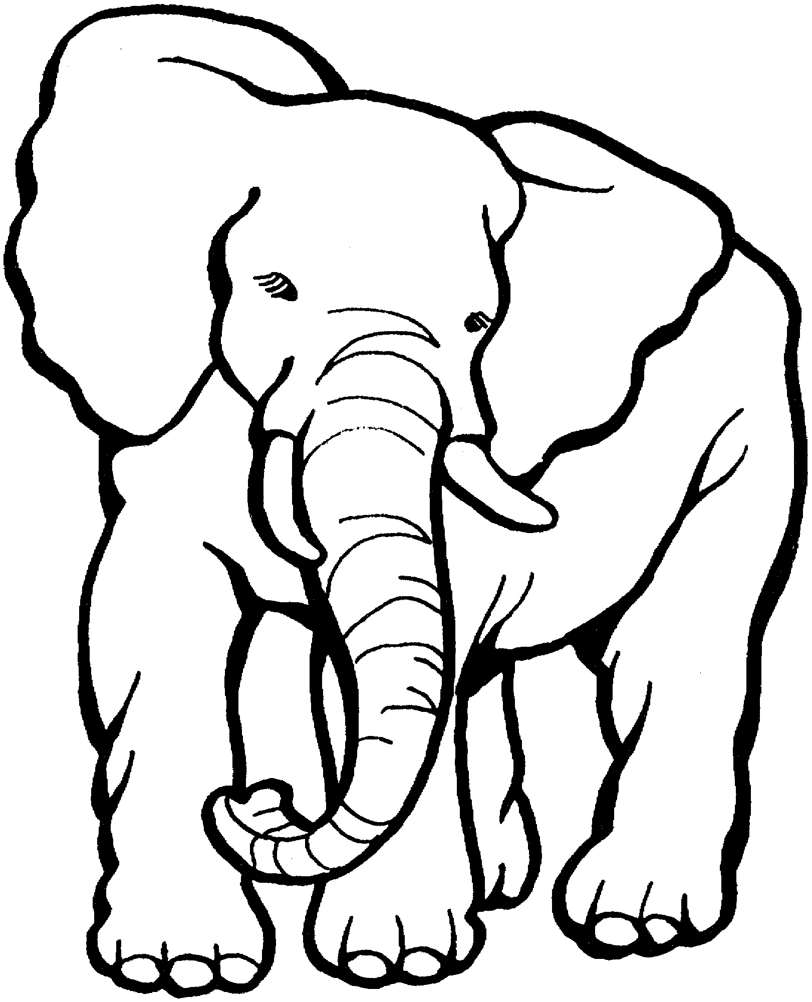 Elephant Coloring Pages Free