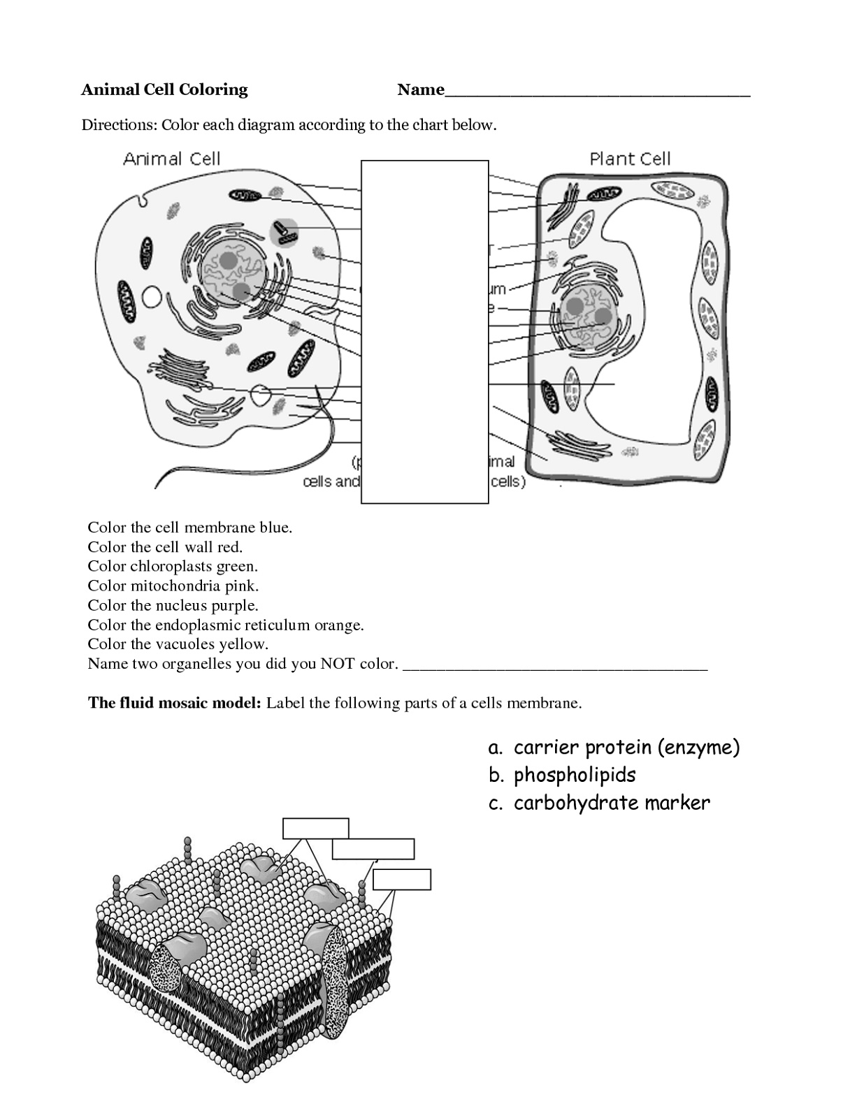 Animal And Plant Cell Coloring