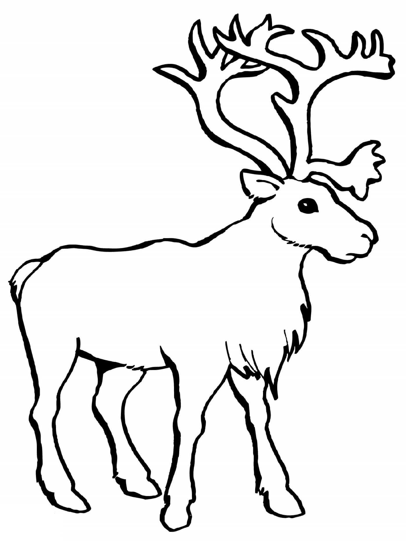 Caribou Reindeer Coloring Pages