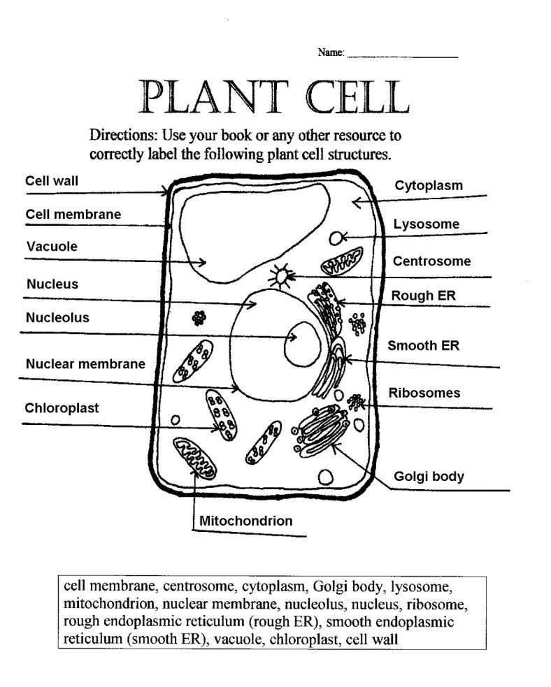 Plant Cell Coloring Key With Word Bank