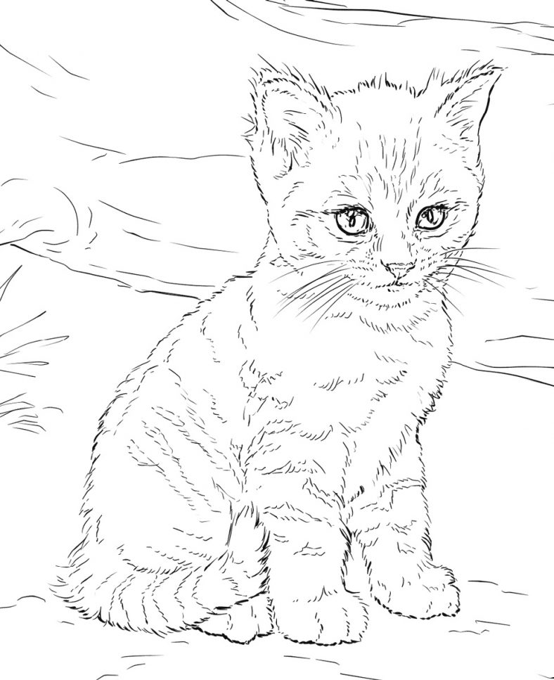 Printable Kitten Coloring Pages Free