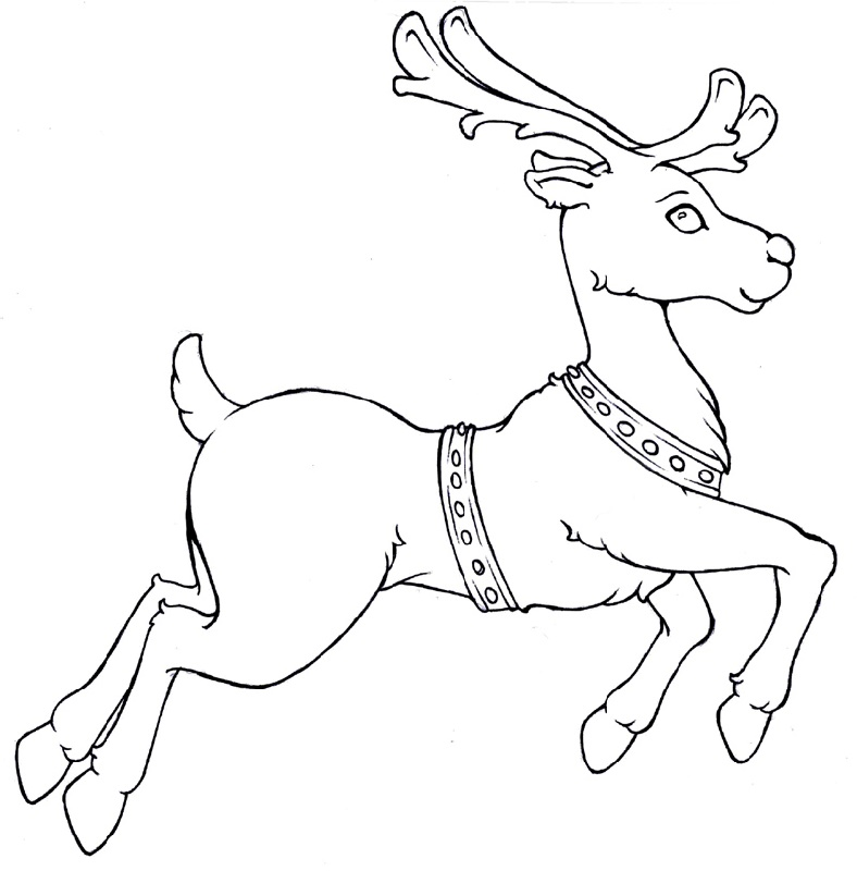 Reindeer Coloring Pages Free