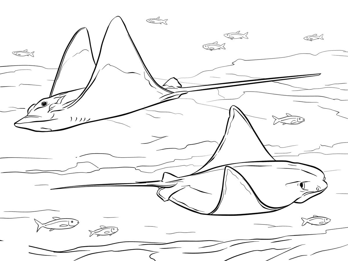 Stingray Coloring Page For Adult