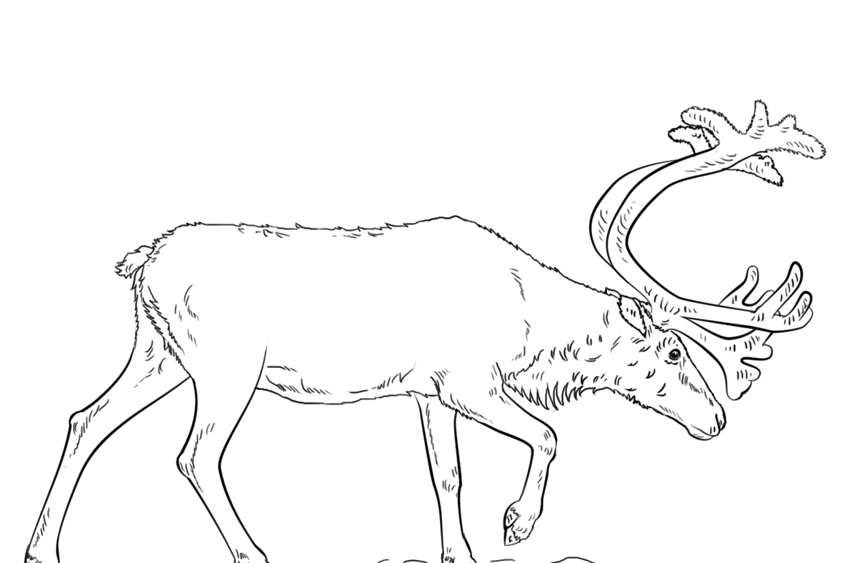 Swedish Reindeer Coloring Pages